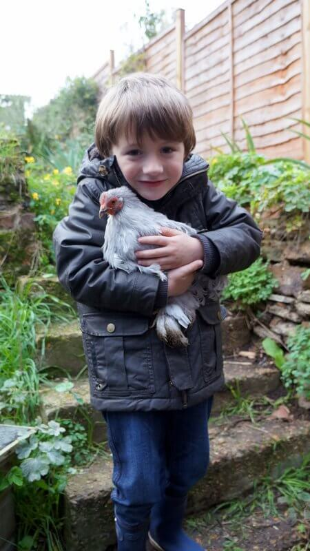 child holding a Pekin Bantam chicken at a Petting Day for Porridge and Rice