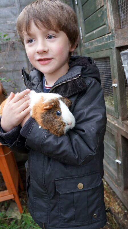 child holding a guinea pig at a Petting Day for Porridge and Rice