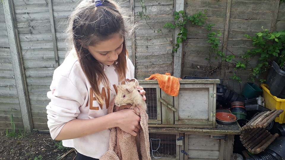 Izzy, a Porridge and Rice Young Volunteer, dries a guinea pig after given it a thorough wash