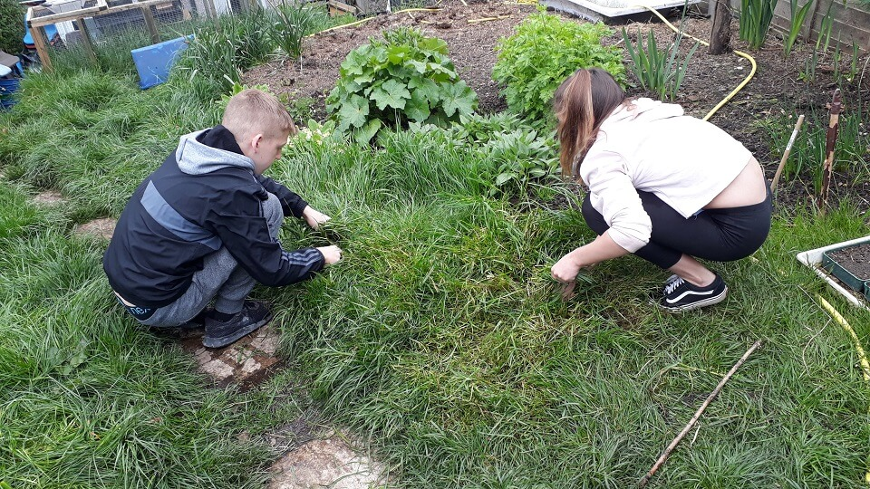 George and Izzy cut freash grass for the guinea pigs that are members of the Petting Zoo that raises money for Porridge and Rice